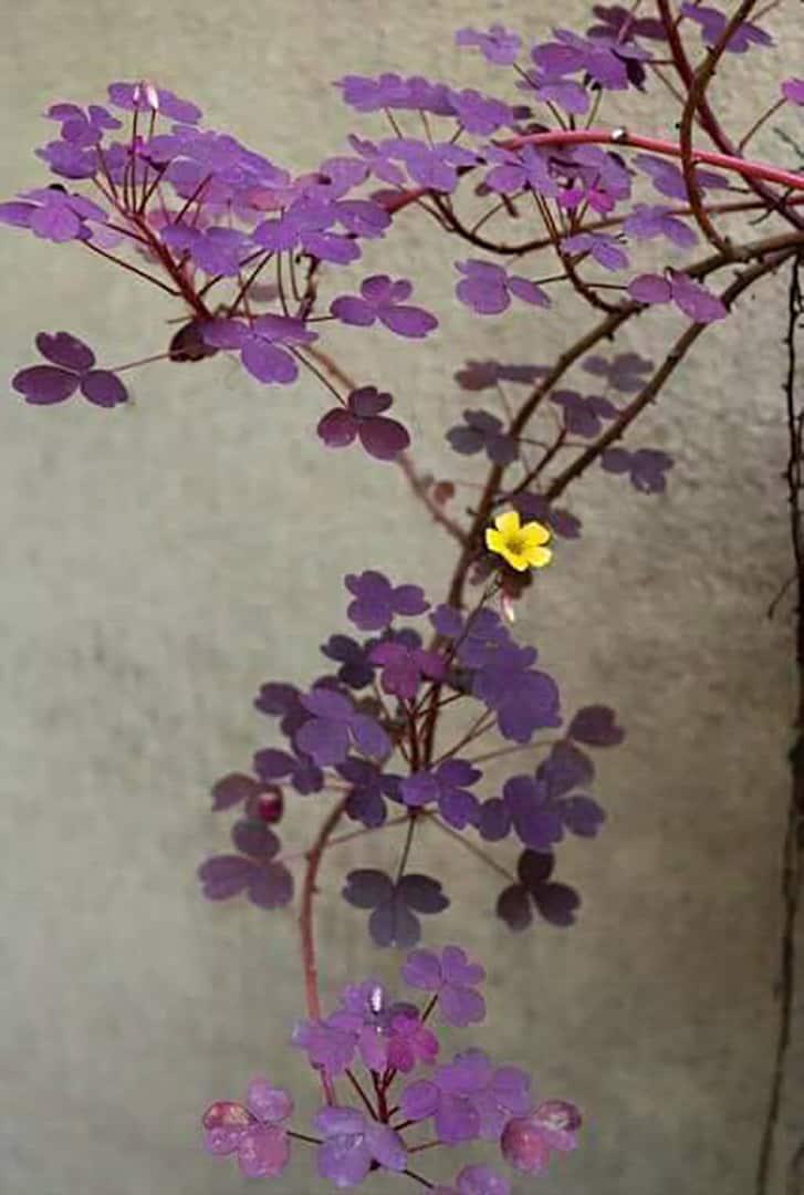 flower upon flower